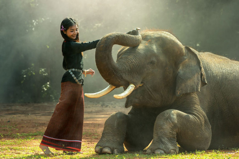タイの象について色々知ろう
