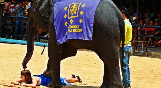 タイの象に会いに行こう!