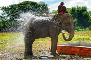 過激化する水掛け祭り「ソンクラーン」